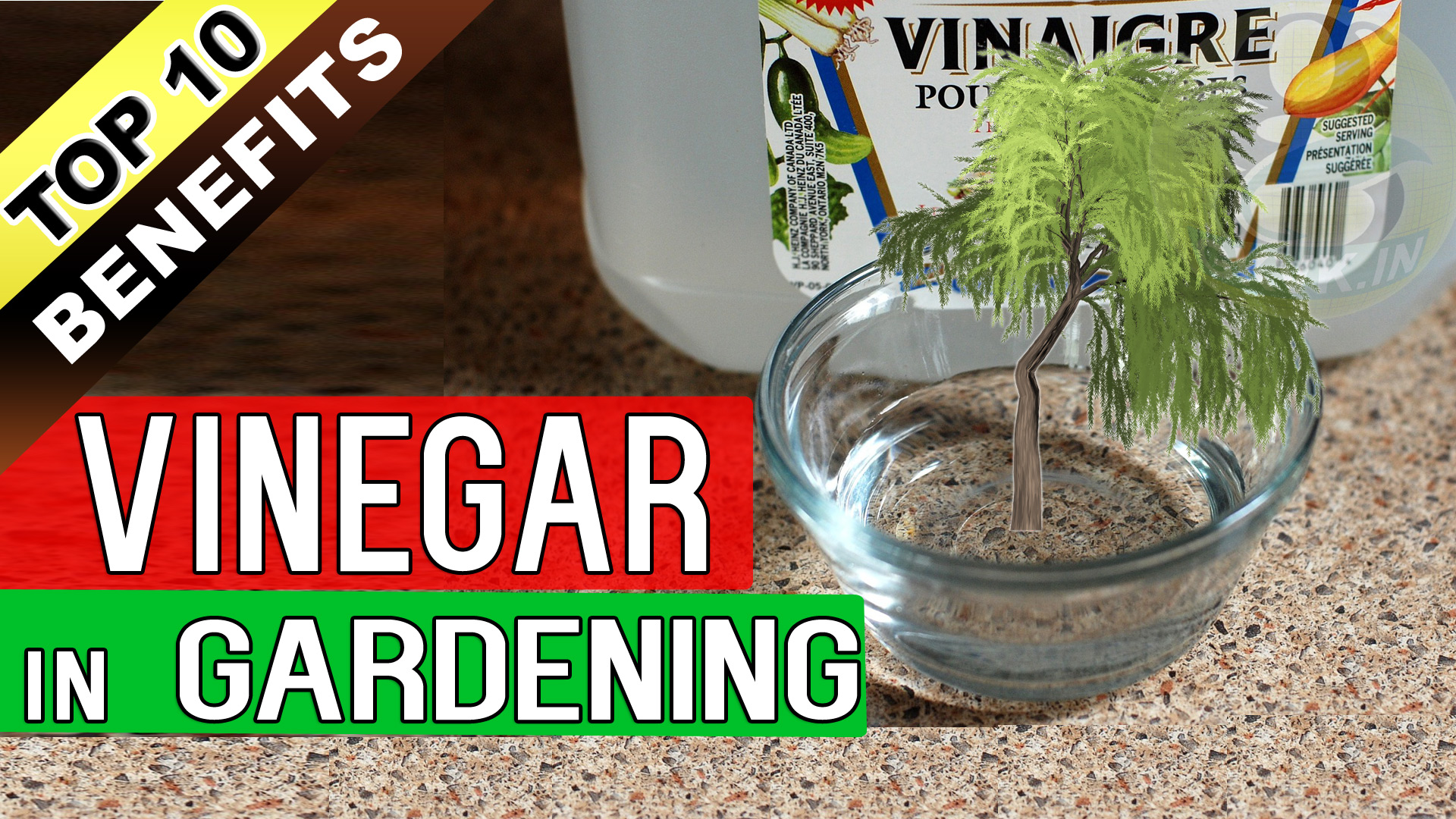 Top 10 Uses Of Vinegar In Gardening Acetic Acid Benefits In