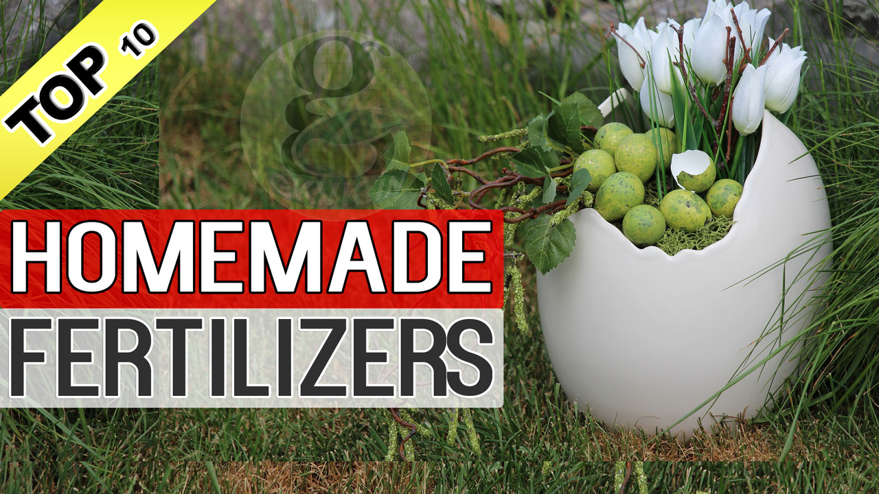 Homemade Organic Natural Fertilizers