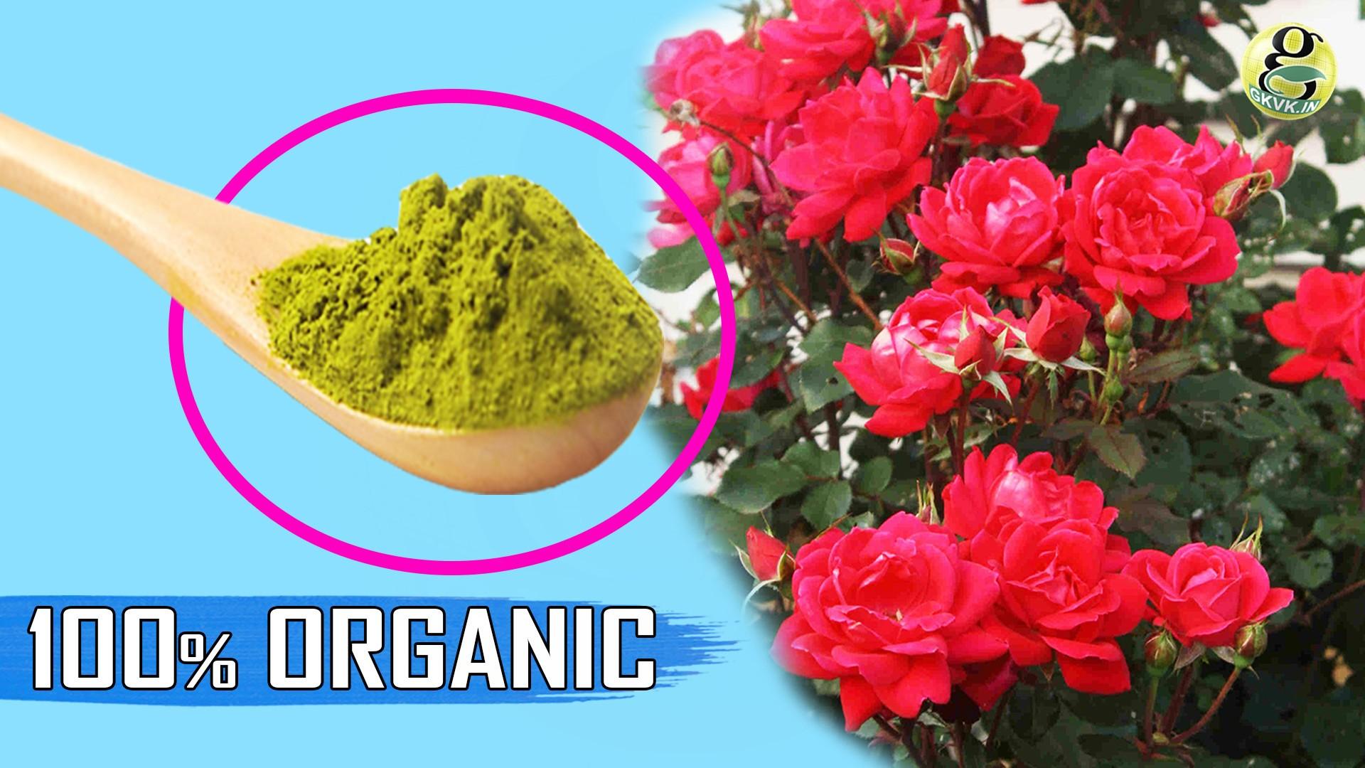 BEST FERTILIZER RECIPE: DIY 100% Organic Fertiliser Mixture